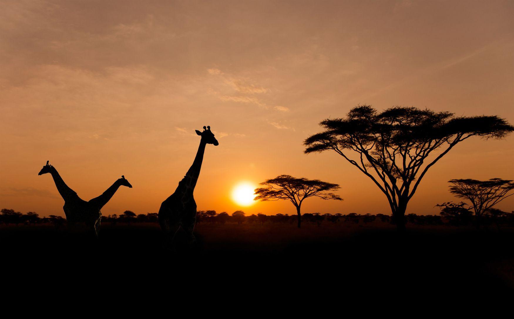 massage-africain-manefaing